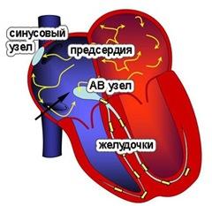 Что происходит в сердце при фибрилляции предсердий?