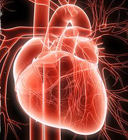 Что происходит с сердцем при дилатационной кардиомиопатии