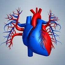 Что происходит с сердцем при гипертрофической кардиомиопатии