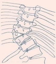 Боковые клиновидные позвонки и полупозвонки