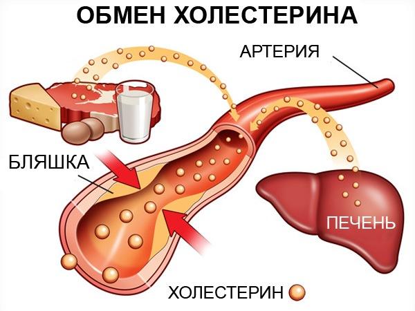 холестерин в крови повышена причины симптомы